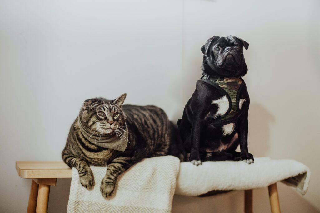 ¿Cómo se hacen las sesiones para mascotas?